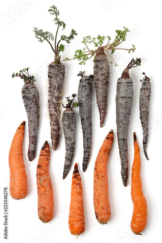 High Angle View Of Rotting Orange And Black Purple Carrots Cut Out On A