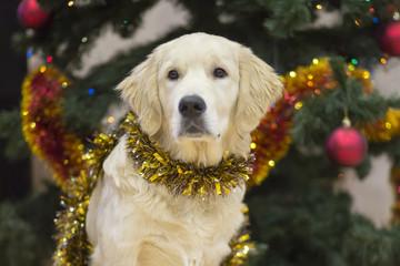 Dog on Christmas tree background. Christmas decorations on the tree.