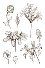 Set of herbal and wild plants, berry and branches. Vintage botanical engraved illustration. Vector hand drawn natural elements. Sketch style.