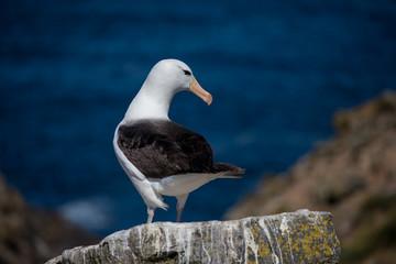 seagull in the sun in antarctica gull
