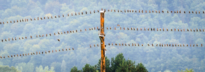Birds resting on electric or telephone wire or cable.