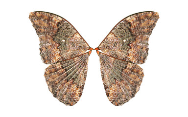 3d Illustration Wings of Insect isolate on White Background with Clipping Path.