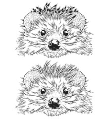 Hedgehog Head, Vector Illustration