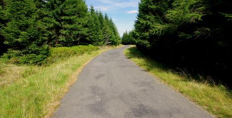 Fototapeta Wiejska asfaltowa ulica przez zielony las pełen choinek - podróż przez polskie puszcze obraz