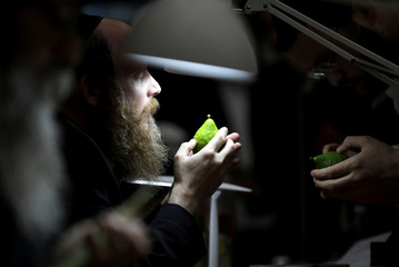 An ultra-Orthodox Jewish man checks an etrog, a citrus fruit used in rituals during the Jewish holiday of Sukkot, at a market in Jerusalem's Mea Shearim neighbourhood