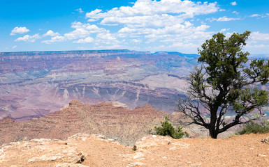 Desert landscape of the southwest of the USA. Grand Canyon and desert plants