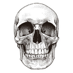 Hand drawn realistic skull. Dotted technique. Vector template design