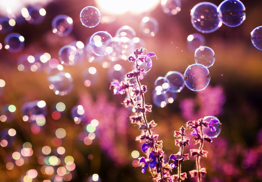 shiny iridescent soap bubbles fly over a green summer bright meadow with lilac flowers on a Sunny clear evening