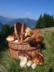 Korb mit Steinpilzen - basket with mushrooms