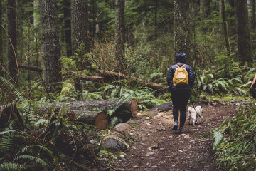 Rear view of woman with dog walking amidst trees at Tiger Mountain State Forest