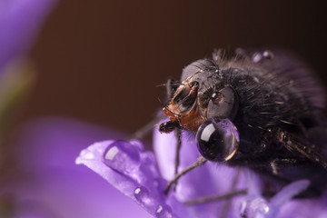 Close-up of insect on wet flower