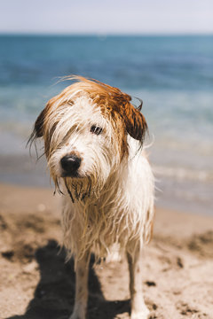 Wet hairy dog standing on shore at beach during sunny day