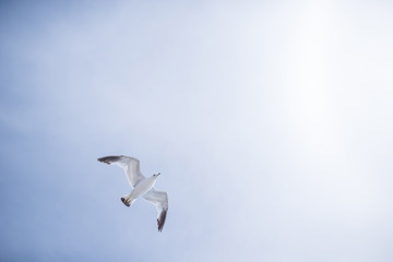 Low angle view of seagull flying against sky during sunny day