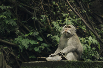 Close-up of monkey looking away while sitting in forest