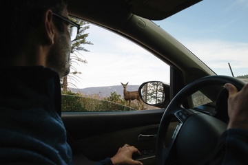 Side view of man looking at deer through car's window in forest at Yosemite National Park