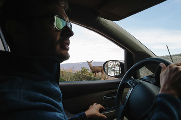 Side view of man in car with deer standing at forest seen through window