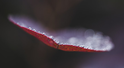 Close-up of water drops on autumn leaf during rainy season