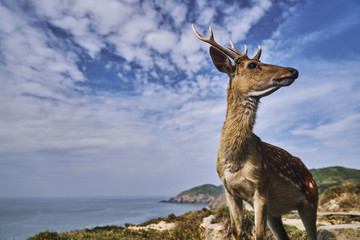Axis Deer looking away while standing on mountain by sea against sky