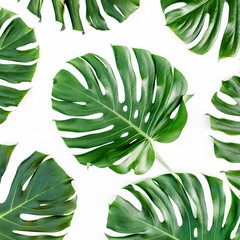 Texture, pattern tropical palm leaf Monstera isolated on white background. Flat lay, top view