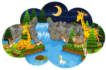 Wild animals in forest at night