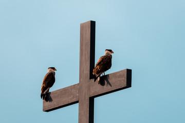 religious birds