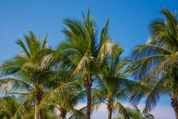 high, beautiful palm trees, clear sky, the sand, the warm tropics.