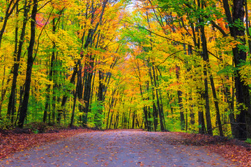 A morning drive in Algonquin among autumn colours