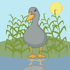 duck vector cartoon