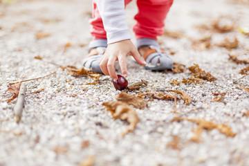 Kastanien sammeln. Collecting chestnut.