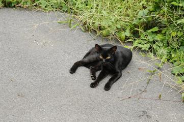 寝そべる黒猫