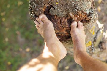 Climbing barefoot on tree. Barfuß auf Baum klettern.
