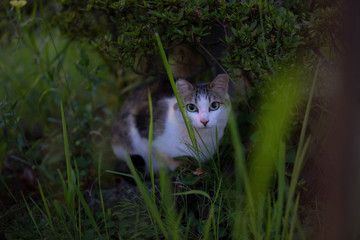 野良猫 表情 スタイル 自由