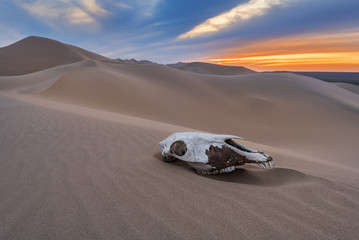 Poster Motorise Beautiful Sunset over the Gobi desert, Skull of a dead animal on sand, dune Khongoryn, Mongolia.
