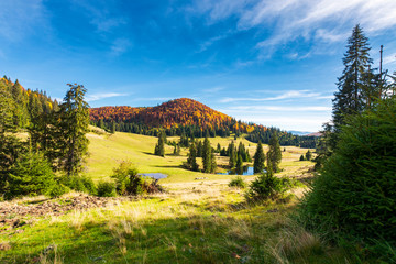 pond among spruce trees. beautiful autumn landscape in mountains. gorgeous light and mood, wonderful day spent outdoors in nature