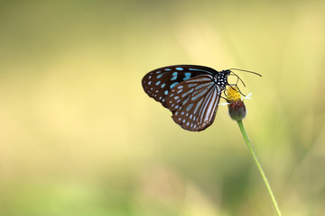 Butterfly on the flower of grass