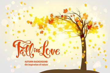Wall Mural - Maple fall tree