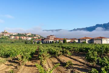 Vineyard with Laguardia town as background, Rioja Alavesa, Spain
