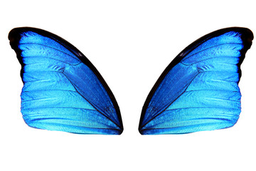 wings of a butterfly blue color isolated on white isolated on white