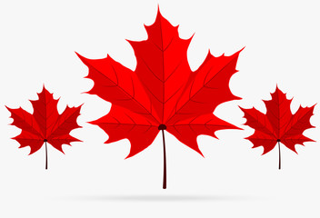 autumn red maple leaf fall isolated on white background