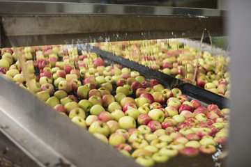 Apples being cleaned by machine