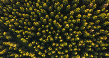 Aerial top view of summer green trees in forest - Drone shot
