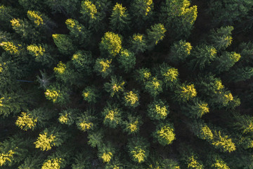Aerial view of forest in mountains, Germany. Photo taken with Drone