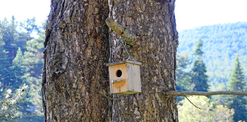 wooden birdhouse hanging from tree with natural in background