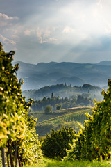 Austria Vineyards Sulztal an der Weinstrasse south Styria , wine country tourist spot.