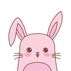 cute rabbit portrait cartoon wildlife