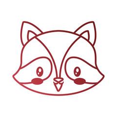 cute face raccoon cartoon animal