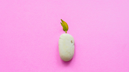 Wall Mural - White rock stone and leaves on pink background.minimal concept