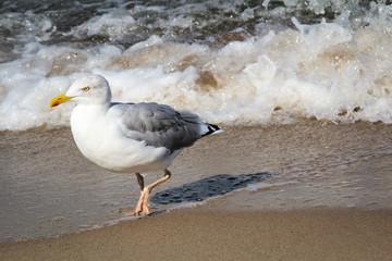 Möwe am Strand, Urlaub am Strand