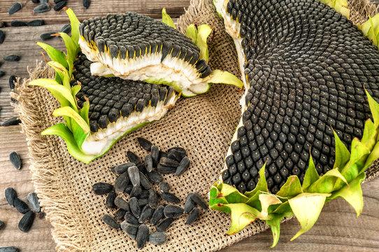 ripe sunflower seeds