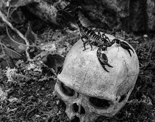 scorpion on a skull